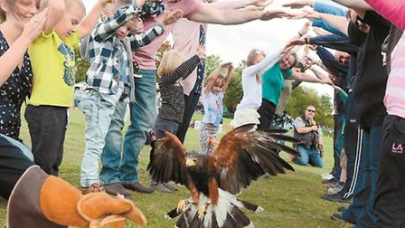 Go bird spotting at the Slough Canal Festival thanks to Ridgeside Falconry
