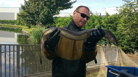 The rare eel was found near West Bromwich