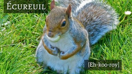 How to pronounce squirrel in French © Thinkstock
