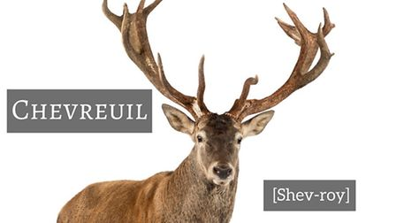 How to pronounce deer in French © Thinkstockphotos