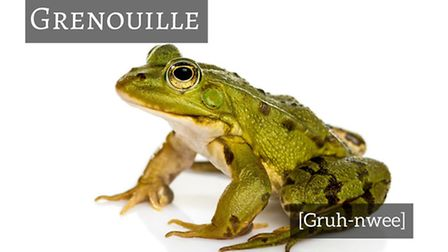 How to say frog in French © Thinkstockphotos