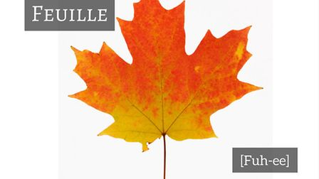 How to say leaf in French © Thinkstockphotos