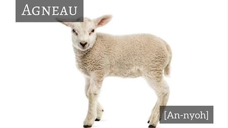 How to say lamb in French © Thinkstockphotos