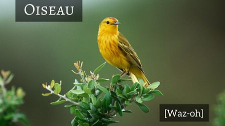 How to say bird in French © Thinkstockphotos