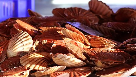 Coquilles St. Jacques are a Normandy favourite