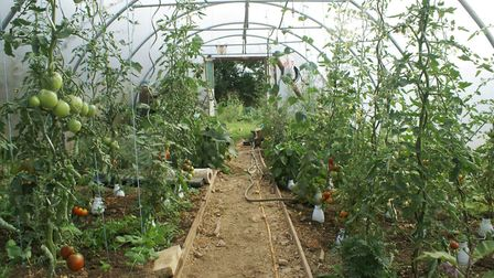 The polytunnel fills up with a variety of fruit and veg during the summer months
