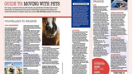 Our guide to moving with pets is essential reading for animal lovers