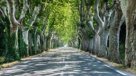 A tree-lined road in Provence - Auto Europe