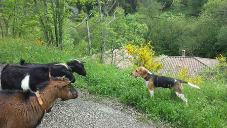 The hilly terrain in Ardèche is perfect for keeping goats © Leslie Rayney and Teo Leyssen
