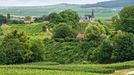 The Montagne de Reims vinyards are some of the most prestigious winthin the champagne area ©artJazz