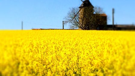 Spotted on a cycle ride along the Loire from Saumur © Oui in France
