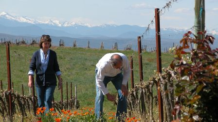 Find out how this expat couple became winemakers in the August issue of Living France