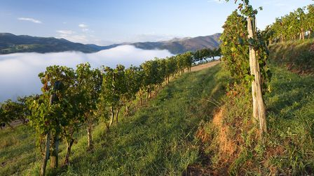 Vineyards in Irouléguy © CC BY SA 3.0