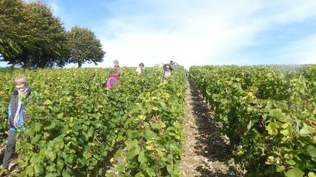 The town of Joigny in Yonne holds its wine festival on 15 October