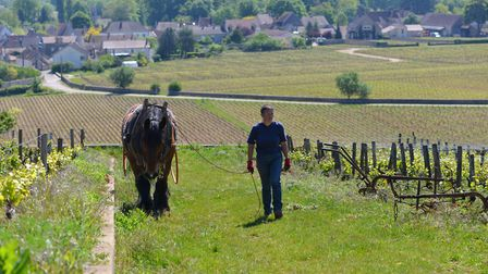 Read how one couple are making wine in Burgundy