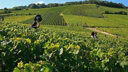 Vineyards above Mesnil sur Oger in Champagne ©Atout France - Olivier Roux