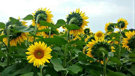 We love this photo of sunflowers in Vienne from our reader Joanna Hinds