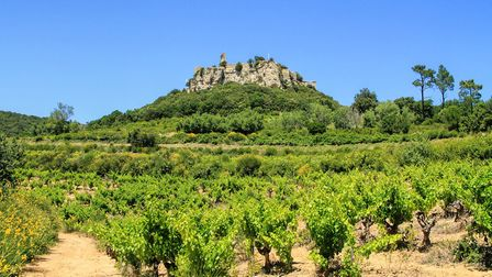 There are vineyards as far as the eye can see in the Languedoc wine-producing area, here at Château