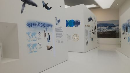 Visit the Espace des Mondes Polaires museum and ice rink