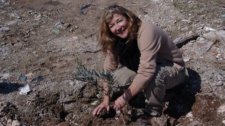 Carol Drinkwater is fascinated by the olive tree