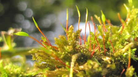 Moss thrives in damp sites