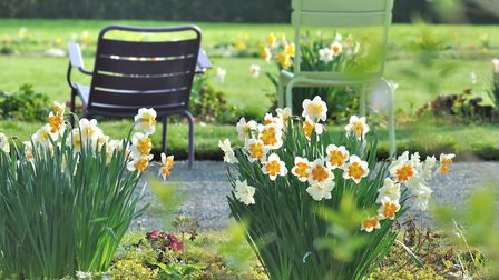 Daffodils blooming in a park during spring in France ©sanddebeautheil - Thinkstockphotos