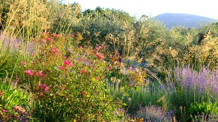 Garden designer James Basson's projects in the south of France feature plants that will thrive in Me