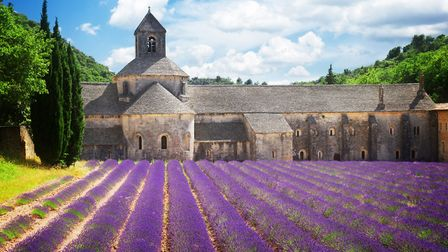 Lavender fields at the Abbaye de Senanque in Provence © neirfy / Thinkstockphotos