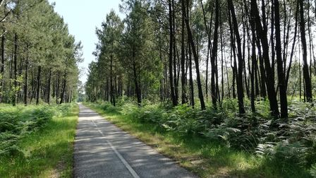 The Gironde à Vélo cycling route goes through the Landes forest ©Sophie Gardner-Roberts