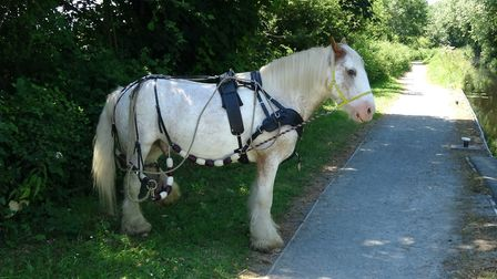 Cracker proves one horsepower... or should that be pony power