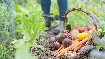 Growing your own veg could help to reduce your food shopping bills © CSMImages Getty Images