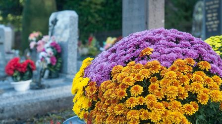 Chrysanthemums are left on graves in French cemeteries for la Toussaint Pic: Neydtstock - iStock/Get
