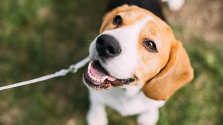 Cute in French is mignon but do you know the word for dog (c) bruev / Getty Images