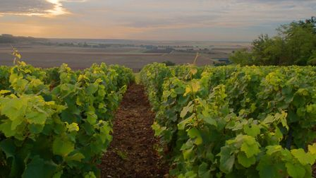 Find out what it's like to live in northern Burgundy, Pic: Martin Pearce