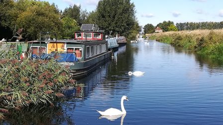 Moorings on the River Lark at Isleham, where there is a marina (photo: Martin Ludgate)