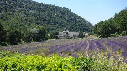 The famous lavender fields of Senanque abbey in Provence photo by Adam Batterbee