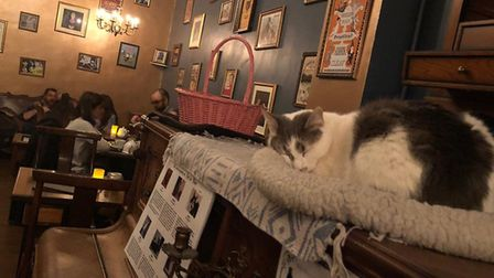 Meet some of Paris' pampered cats at its original cat cafe. Pic: Le Cafe des Chats