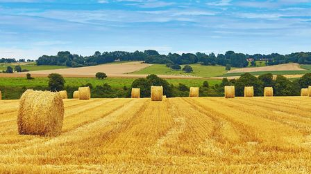 Golden hay bales in Normandy (c) encrier Getty Images