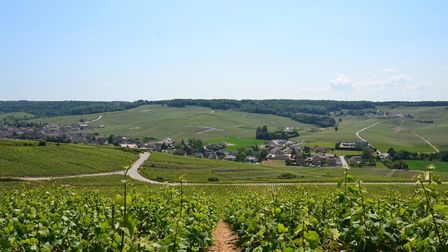 The beautiful vineyards of Champagne. Pic: Pixabay
