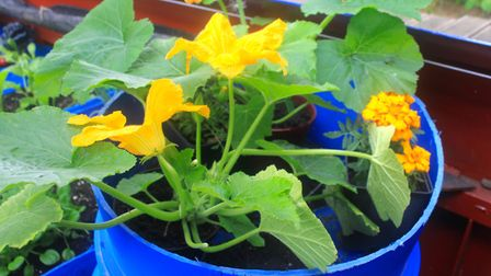 Courgettes on the menu