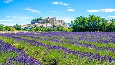Admire the lavender fields of the Luberon on the Magical Provence tour. Pic: Simon Dannhauer/iStock/