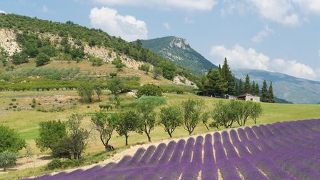 Drome is know for it's fields of lavendar (c) IvonneW / Getty Images
