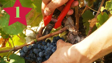 Win a wine experience with Gourmet Odyssey