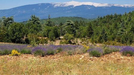 Its limestone summit makes Mont Ventoux look snowcapped even in summer (c) wjarek Getty Images