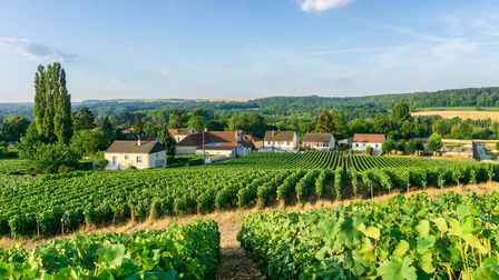 Why not live among the sprawling vineyards outside Reims in the Champagne region? (c)southtownboy/Ge