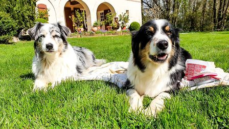 Beth Haslam's dogs don't seem to mind having the family at home all the time