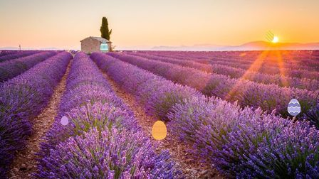 Valensole, Provence (c) ronnybas / Getty Images