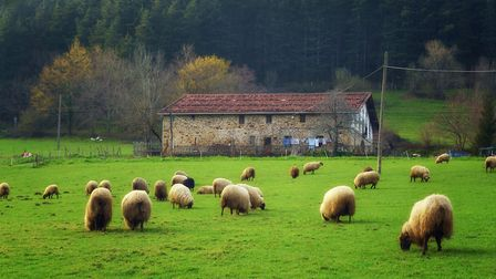 Thinking of starting your own smallholding in France? Here are the key things you need to know. (c)M