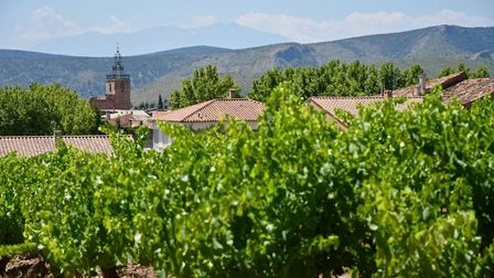 Vineyard and church in Aude (c) Ed Bussell