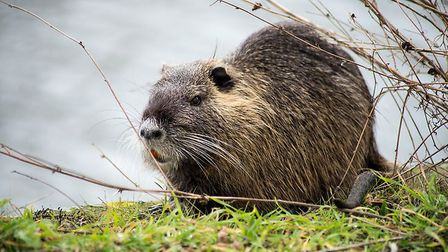 Spot beavers in the Loire Valley. Pic: Neydtstock/Getty